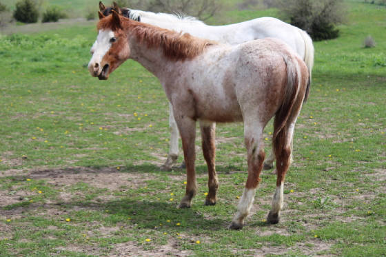 2016diamondcoltyearling.jpg